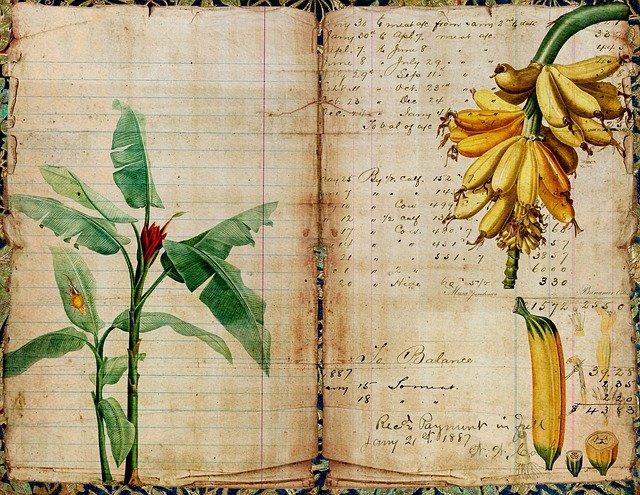 collage journal banane