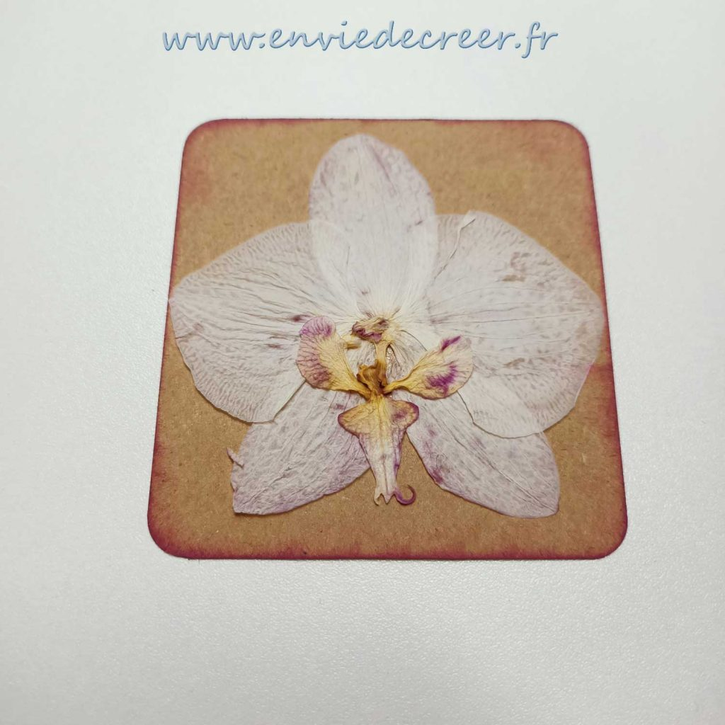 11-emballages-plastiques-coller-fleur